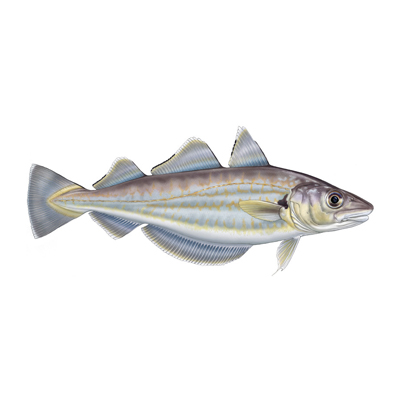 Whiting by Marc Dando