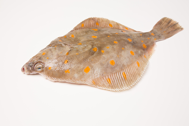 Plaice added to Recommended List